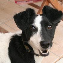 DIXIE - 2 ans : Adoptée le 18 Septembre 2009