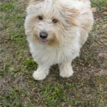 BOULE - 2 ans : Adopté le 9 Janvier 2011