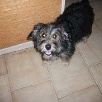 NOISETTE - 5 mois : Adopté le 16 Décembre 2010