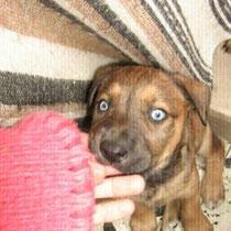BLUE BOY - 3 mois : Adopté le 9 Mai 2009