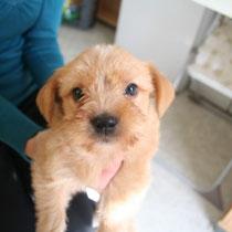 KIWI - 2 mois : Adopté le 10 Octobre 2010
