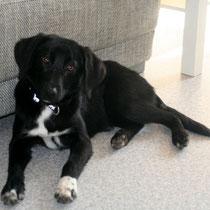 BETTY - 9 mois : Adoptée le 4 Février 2012