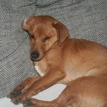 HORUS - 10 mois : Adopté le 16 Février 2013