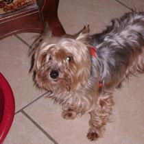 CHIPPIE - 8 ans : Adoptée le 13 Juillet 2009