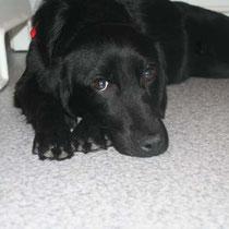 TESS - 9 mois : Adoptée le 2 Décembre 2011