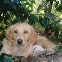 ERA - 6 mois : Adoptée le 19 Avril 2009