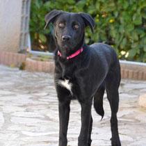 IOUKA - 9 mois : Adoptée le 14 Février 2014