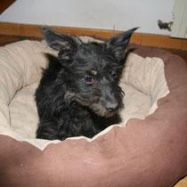 MAVRI - 3 ans : Adoptée le 3 octobre 2008