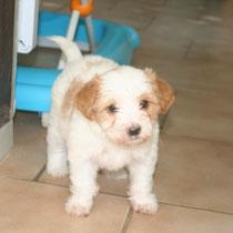 PIMOUSSE - 2 mois : Adopté le 15 Octobre 2010