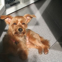 LUNA - 5 ans : Adoptée le 12 Octobre 2012
