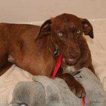 DAO - 8 mois : Adopté le 25 Mai 2009