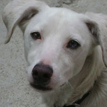 FLOCON - 1 an et demi : Adopté le 6 Aout 2011