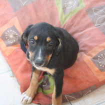 ELIA - 2 mois : Adoptée le 10 Septembre 2009