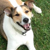 MOKA - 4 ans : Adoptée le 26 Octobre 2013