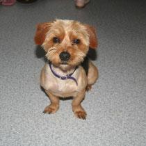 MOZART - 9 mois : Adopté le 30 Avril 2011