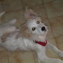 SΜΟΚΥ - 5 mois : Adopté le 14 Août 2010