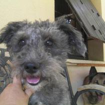 EROS - 2 ans : Adopté le 12 Août 2012