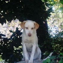 BINGA - 6 mois : Adoptée le 29 Avril 2009