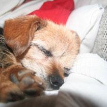 ETOILE - 8 ans : Adoptée le 14 Septembre 2013