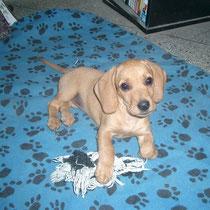 KITTY - 3 mois : Adoptée le 25 Juillet 2011