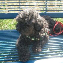 CLARK - 7 ans : Adopté le 14 Août 2012