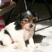 PRUNE - 2 mois : Adoptée le 10 Octobre 2010