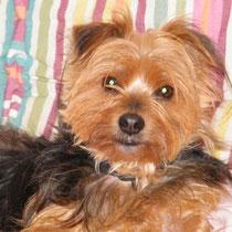 CALINE - 8 ans : Adoptée le 20 Décembre 2009