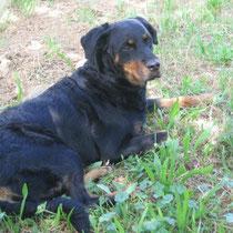TINA - 5 ans : Adoptée le 30 Mai 2010