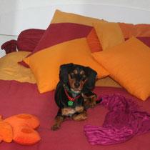 JOKER - 1 an : Adopté le 27 Novembre 2010