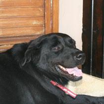 MOLLY - 5 ans : Adoptée le 16 Septembre 2009