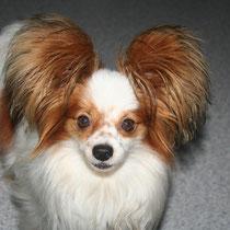 DOLLY - 3 ans : Adoptée le 15 Juin 2012