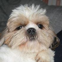 ENZO - 15 mois : Adopté le 1er Février 20111