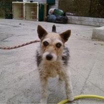 NENETTE - 6 ans - Aveugle : Adoptée le 28 Mars 2008