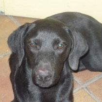 LUNA - 1 an : Adoptée le 29 Mai 2009