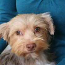 FRAISY - 1 an : Adoptée le 31 Octobre 2010