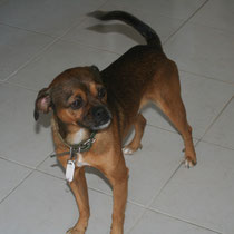 GAROU - 4 ans : Adopté le 3 Novembre 2009
