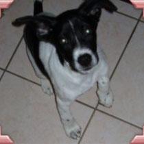 DUSTY - 2 mois : Adoptée le 23 Décembre 2008