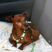 ANA - 6 ans : Adoptée le 23 Février 2012