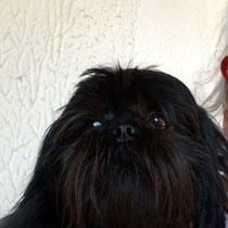 CELIA - 5 ans : Adoptée le 28 Février 2012