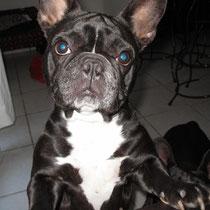 CLEO - 6 ans : Adoptée le 8 Avril 2011