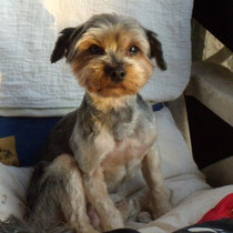 LUCKY - 4 ans : Adopté le 9 Décembre 2012
