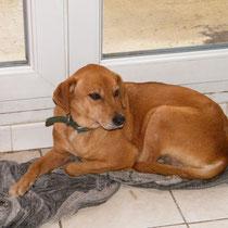 LOLA - 7 ans : Adoptée le 12 Janvier 2010
