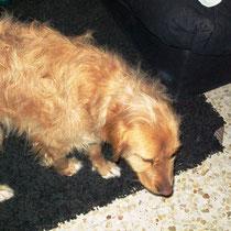 LUCKY - 3 ans : Adoptée le 16 Mars 2009