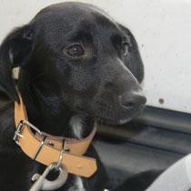 GANDHI - 4 mois : Adopté le 28 Juillet 2011