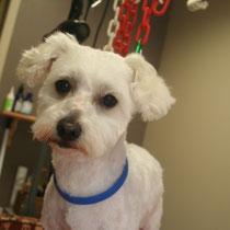 MICKEY - 3 ans : Adopté le 23 Octobre 2013