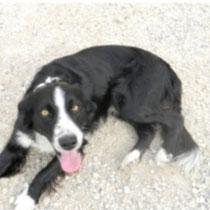 DOMINO - 1 an : Adopté le 25 Novembre 2010