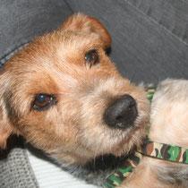 FIDJI - 3 ans : Adopté le 23 Février 2014