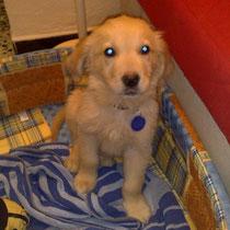 PALKAN - 2 mois : Adopté le 2 Janvier 2009