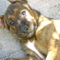 ADAM - 3 mois : Adopté le 29 Juillet 2012