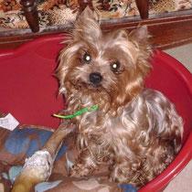 SKY - 9 ans : Adopté le 13 Juillet 2009